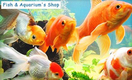 Fish aquarium fish food gold fish deals in shanker market for Fish tank deals