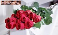 Blossoms4u
