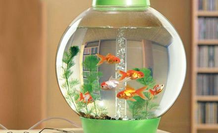 Aqua Beauty Aquarium