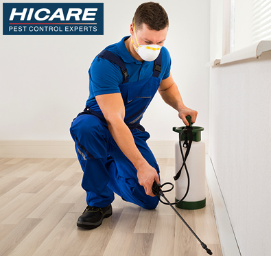 Get upto 40% off on pest control services @ Hicare