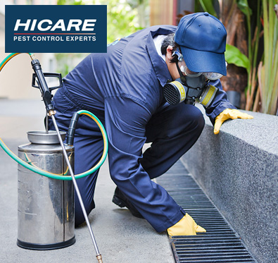 Rs 1200 off on pest control services from Hicare